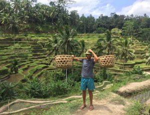 Rise Fields - Bali 2016