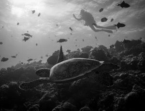 Maldives 2016 | Golive